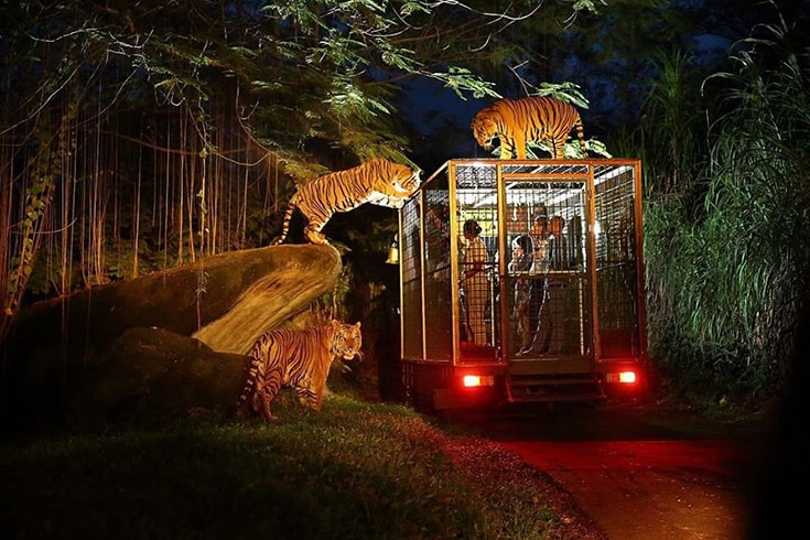This image has an empty alt attribute; its file name is enjoy-night-safari-in-cat-tien-national-park-40aavietnamtravel1.jpg